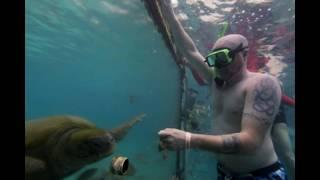 Sea Aquarium Park, Curacao, April 2018