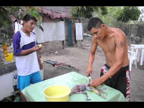 Georje Pelando Una Iguana Youtube