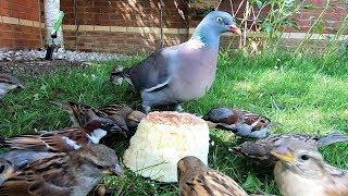 Fluffy Cheese Cake Feeders Bird