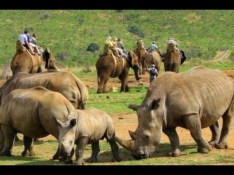 10 حيوانات مهددة بالإنقراض في 2015