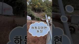 하동가람채 재첩 잡이30년김연현농장이야기
