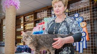 WCF ринг длинношерстных и полудлинношерстных кошек эксперт -  Nina Grinakovskaya