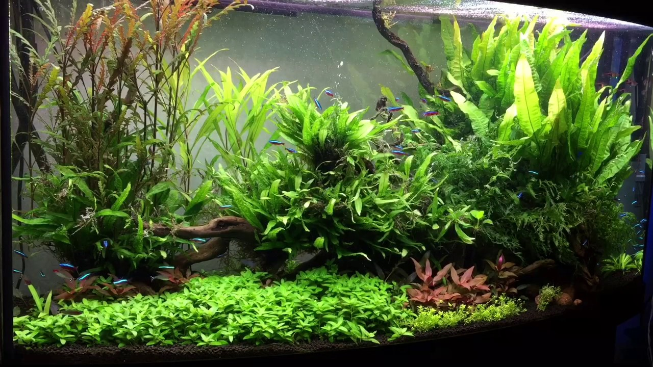 Innovativ Juwel Vision 260 + Helialux 54w + 2x Highlight Color Planted Tank  FQ38