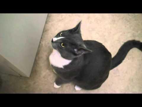 Talking Cat Says I Love You CUTE