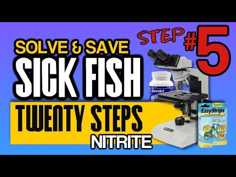 Nitrites Kill Fish So Hideously, How? What To Do: Step 5 Of 20