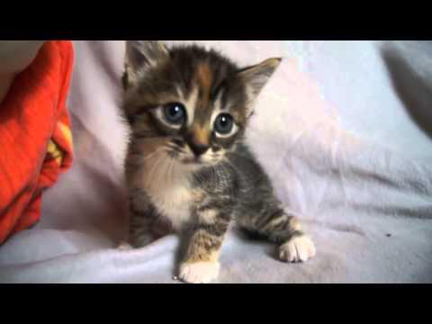 Mèo Con Dễ Thương Kêu Mẹ Meoows