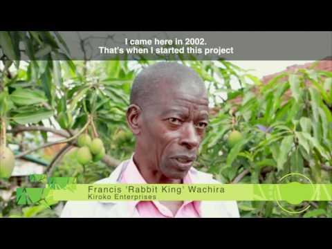 Urban Farming in Nairobi