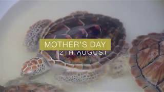 Turtle Release Mother