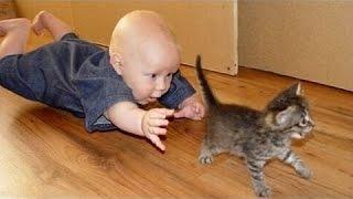 Smiješne Mačke I Bebe Igraju Zajedno - Slatka Mačka