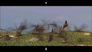 Как убрать черные полосы в видео Wondeshare Filmora