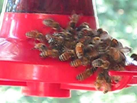 Thirsty Honey Bees On A Humming Bird Feeder