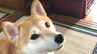 ご主人様がお出かけ、お仕事?それとも遊び?犬はすべてわかってるかも…。