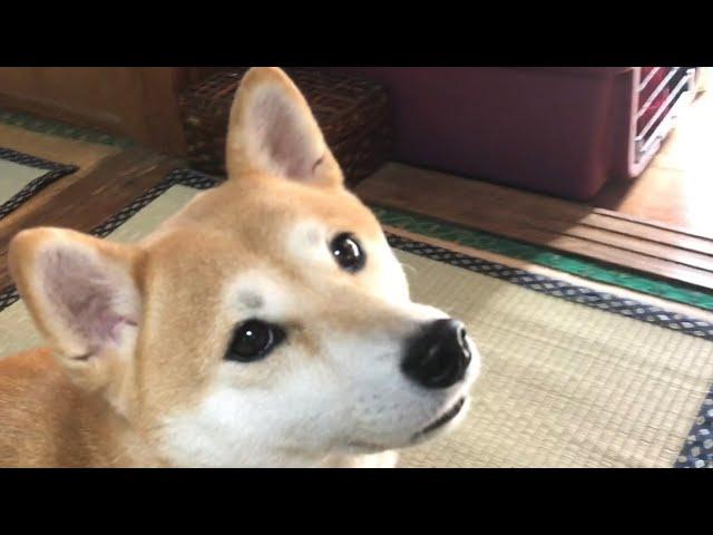 犬は仕事に行くのか遊びに行くのか分かってる説 Dog knows where the owner goes