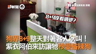 狗界8+9整天對著客人吠叫!紫衣阿伯來訪讓牠秒變俗辣狗 thumbnail