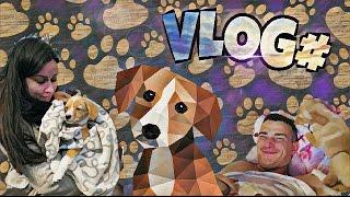 VLOG: Мы взяли собаку из приюта