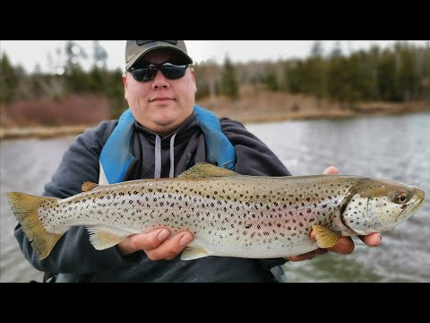 Brown Trout Fishing The Majestic Bras D'or Lakes. (Epic Rapala/fly Fishing!!)