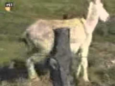 Animal Sex Taboo