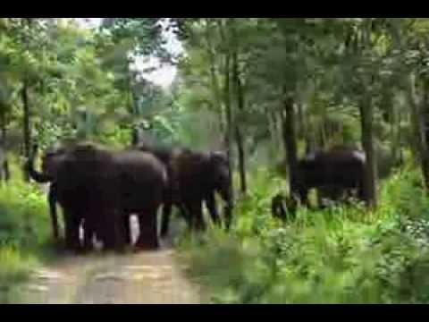 elephant attack at muthanga trekking