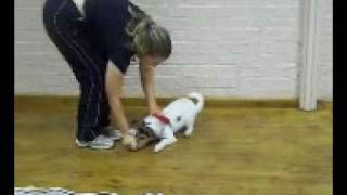New Beginnings Dog Training Club Puppies And Adult Dogs Doing Their Thing