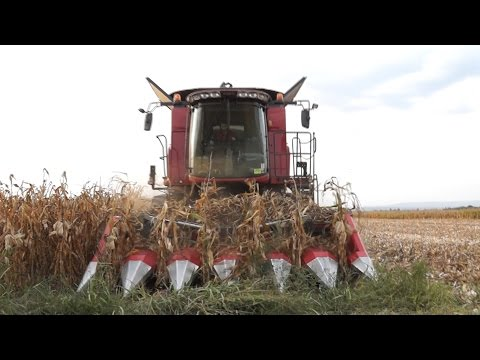Corn harvest 2015 | Case IH Axial Flow 5130