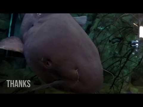 Great American Outdoorsmen Show/ BPS Harrisburg Vlog
