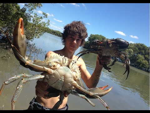 EP 3 - HUGE MUDCRABS Caught BAREHANDED - Catch n Cook - With BUTTER LEMON Sauce! | TDK