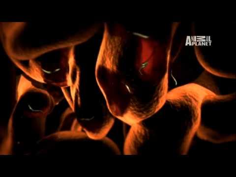 Download Monsters Inside Me- Flesh-Eating Hookworm