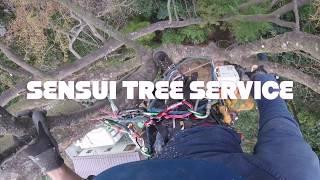 越境枝剪定 〜2,3日目〜 Pruning of obstructing branches 〜Days 2 and 3〜 thumbnail