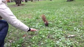 Wiewiórki w parku