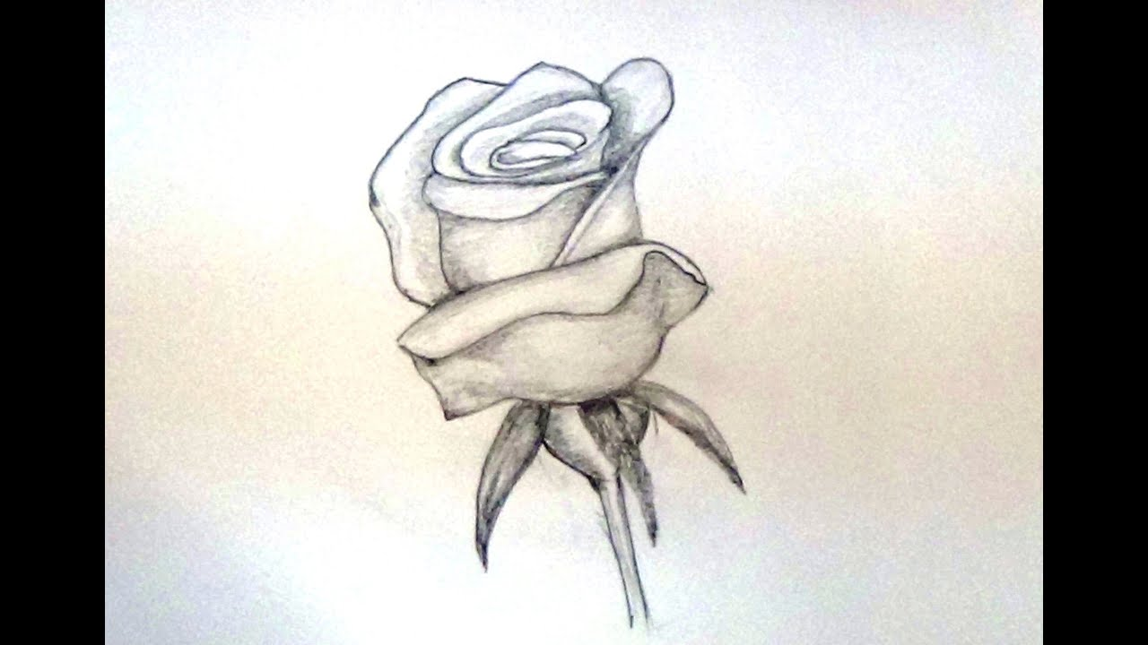 How to draw a rose flower how to draw rose easy for beginners how to draw a rose flower how to draw rose easy for beginners youtube ccuart Image collections