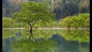 山形県飯豊町の白川湖は四季折々、美しい姿を見せる。特に夏前のひとと...