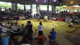 Чемпионат мира по Сумо 2015 г.Осака,Япония. (Галета)