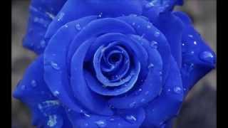 CÓMO AMARSE A UNO MISMO. Meditación de LOUSE HAY en la voz de ALHAMA MARCOS