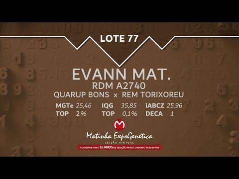 LOTE 77 MATINHA EXPOGENÉTICA 2021