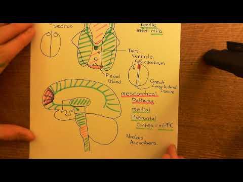 Drug Addiction Part 2