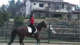 Danielle Vasinova- Horseback Riding English