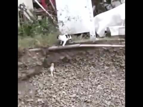 Amazing Cat Rescues Puppy From Ditch In India