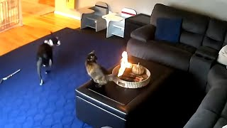 Cat Doesn't Care That It's On Fire