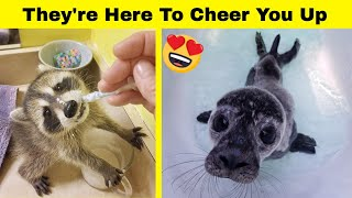 Cute Animals To Cheer You Up