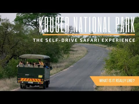 What It's Like to Safari at Kruger National Park in South Africa