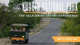 What It\'s Like to Safari at Kruger National Park in South Africa | A Travel Guide