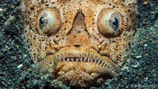 Top5 Venomous sea creatures