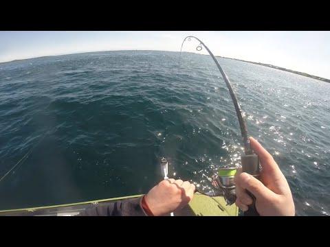 INSANE TASSIE SALMON FISHING || Fishing Tasmania 2019: Tamar River
