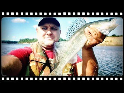 Как поймать судака летом на живца видео
