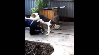 Мальчик против собаки