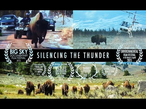SILENCING THE THUNDER | National Geographic Documentary | YELLOWSTONE BISON (Buffalo)