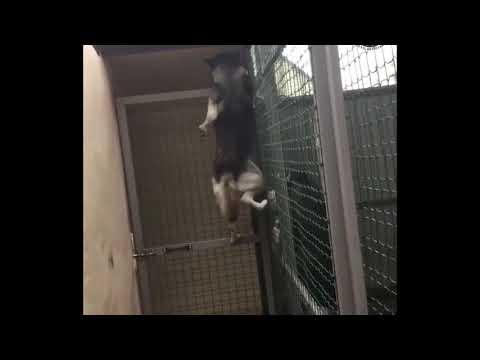 Spectacular escape dog