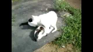 Видео с камеры Samsung GT-S5230 La Fleur(Специально для http://sotoguide.ru/phones/samsung/gt-s5230_la_fleur/, 2013-02-16T15:37:24.000Z)