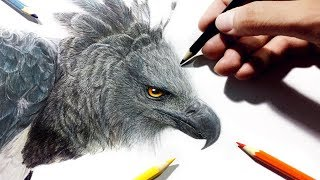 Speed Drawing | Harpy Eagle | with school pencils