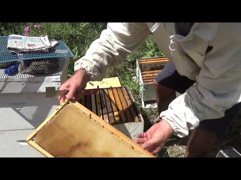 Информационный портал ПЧЕЛОМАТКА. Мед и пчеловодство